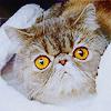 Owl-faced cat