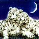 tigers lions avatars 0537